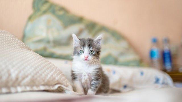 猫 ネコ ねこ